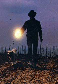 Oscar 2021: nella shortlist c'è un documentario sul Tartufo Bianco d'Alba
